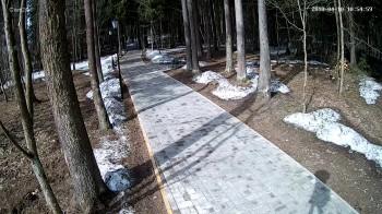Абрамцево, Пешеходная зона, Лес